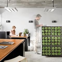 Vertikaler Garten als Raumteiler oder Sichtschutz