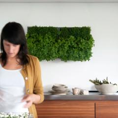 Bepflanzte Wände für Indoor