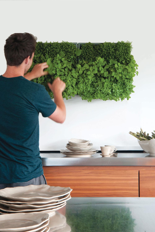 Als Kräutergarten in der Küche