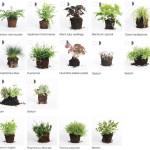 pflanzen_kraeuter_fuer_vertikalen_garten_living_wall