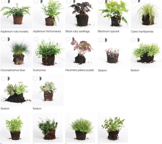 Geeignete Pflanzen