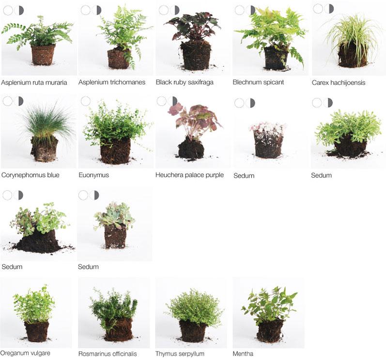 Geeignete pflanzen wandbegr nung wandbegr nung - Pflegeleichte pflanzen fur den garten ...
