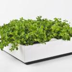 Wandbegrünung Design Idee sehr gut getestet Vertikaler Garten indoor outdoor